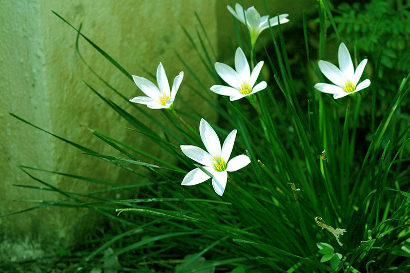 Flowers grass white flower artificial flowers free photo flowers grass white flower artificial flowers mightylinksfo
